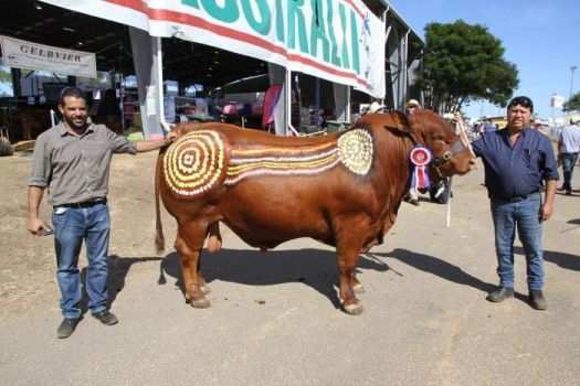 blackfella beef brand