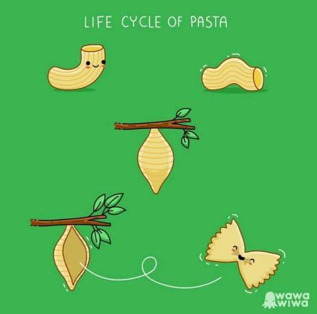 pasta life cycle